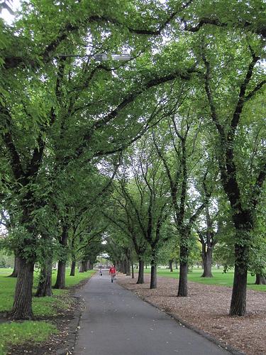 Darling Gardens Clifton Hill 52/10/3