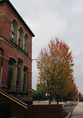 Gold Street Primary with autumnal trees 52/23/1