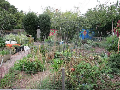 Mater Street Community Garden 52/12/1 #fp13